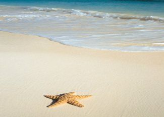 Lido Beach, Florida, where I got my shells from. Sand is soft and so many shells along the shoreline!