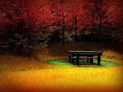 AutumnAutumn Photos, Nature, Autumn Leaves, Parks Benches, Colors, Desktop Backgrounds, Picnics Tables, Landscapes Photos, Desktop Wallpapers