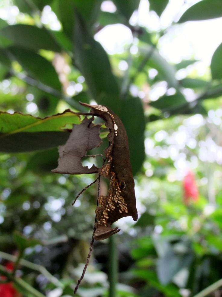 caterpillar  (by pingwynne)