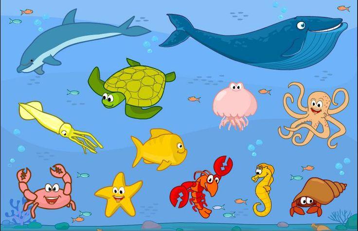 pipo animales marinos