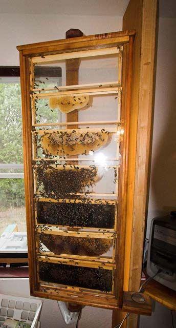 Homemade Observation Hive  #Amazmerizing