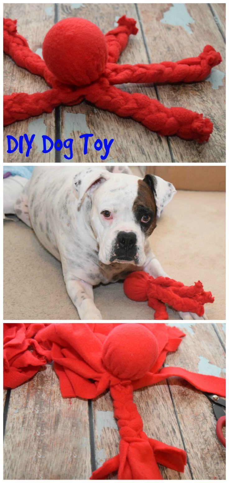 Make this easy No Sew DIY Dog Toy even if you aren't crafty! And, feed your dog #NutritionWorthWaggingFor! #ad