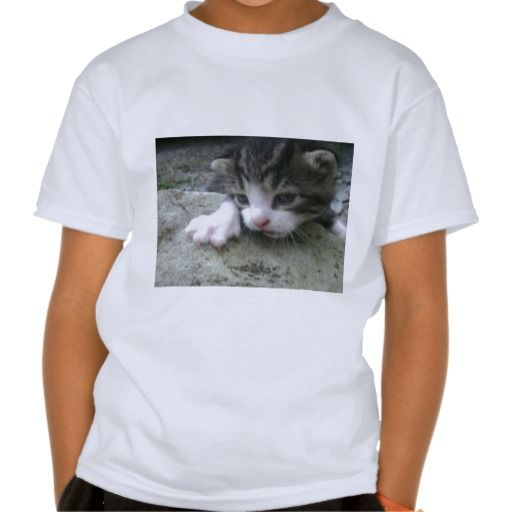 Mountaineer Kitten Tshirt!  Don't want to buy a kitten shirt?  Look at the kitten.  Keep looking.  Say no to the kitten.  We accept all major credit cards.  #child #kitten #shirt #cute #customizable