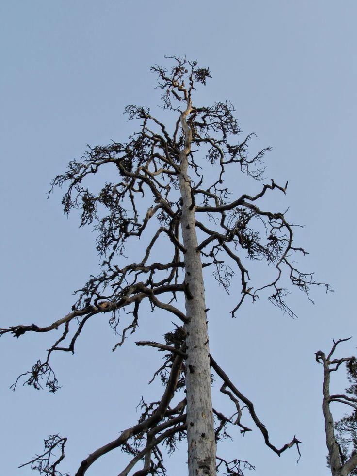 Multiharju, Seitseminen National Park