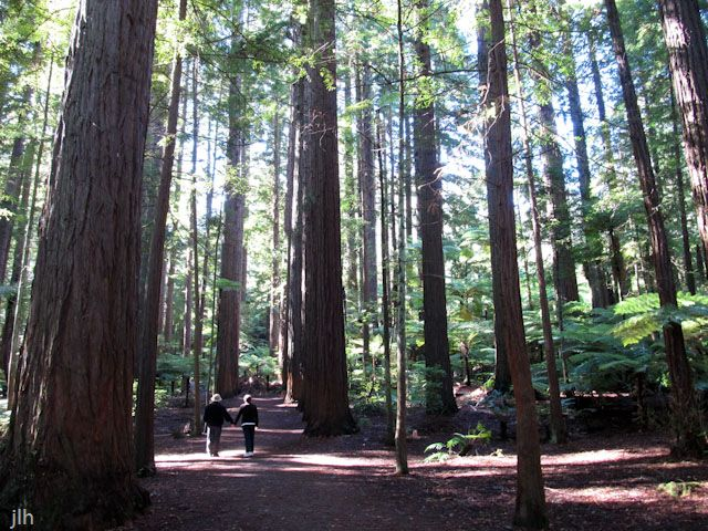 This picture is taken in the Redwood Forest in #Rotorua New Zealand when Jennifer's parent's were visiting #NewZealand (they feature in this picture). If you've seen our calendars you'll know we have a soft spot for Rotorua's Redwood forest smile emoticon.