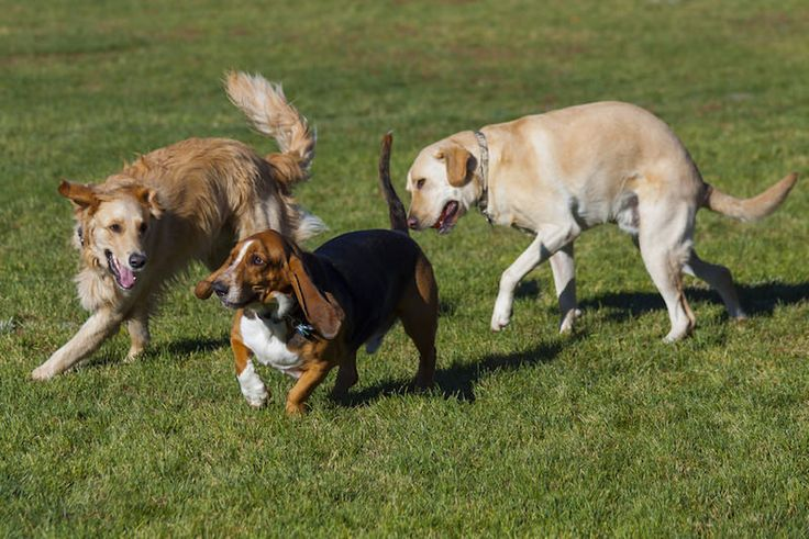 Dog parks can be great fun but they can also be trouble if not handled correctly. Here are some tips for taking your dog to a park.