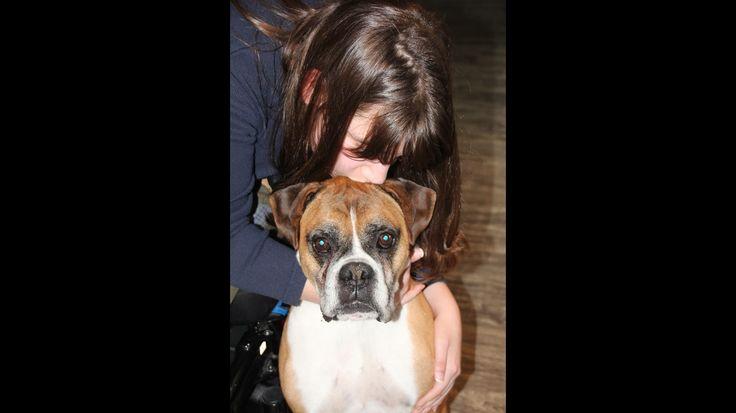 Voici Taz, un amour de boxer. Il est le sage dans mon équipe de partenaires en zoothérapie. #boxer #dog #zootherapie