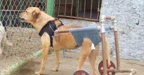 Aprenda a fazer uma cadeira de rodas para animais em pvc, simples, fácil de fazer, barato e funcional