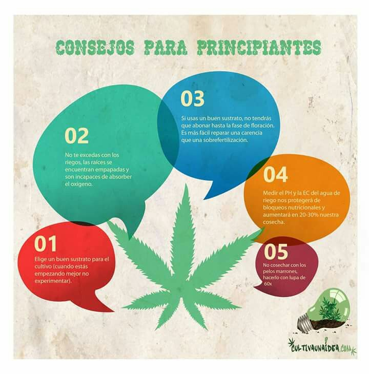 #Infographic #Cannabis #Tips #Growing