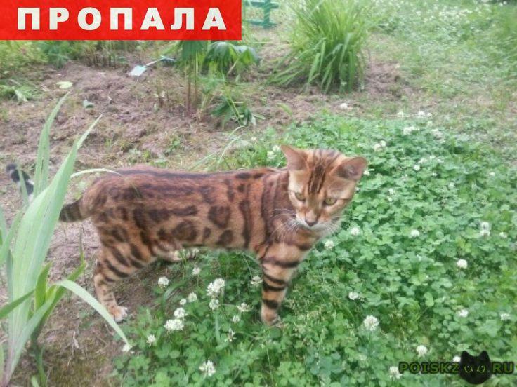 Пропал кот помогите найти г.Раменское http://poiskzoo.ru/board/read26702.html  POISKZOO.RU/26702 Пропал бенгальский кот! Расцветка тигровая. На золотисто-коричневом фоне черные полосы и пятна! Кот ослабленный после болезни! Просьба сообщить любую информацию. ВОЗНАГРАЖДЕНИЕ ГАРАНТИРУЕМ!   РЕПОСТ! @POISKZOO2 #POISKZOO.RU #Пропала #кошка #Пропала_кошка #ПропалаКошка #Раменское
