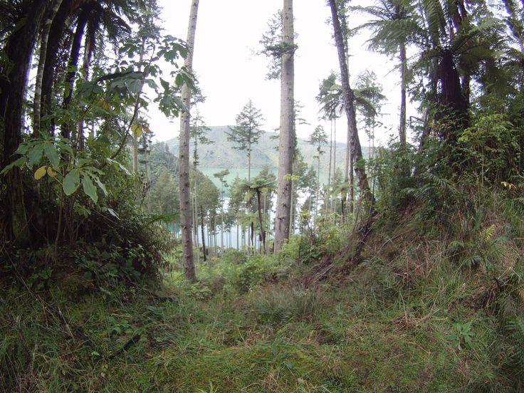 Rotorua in Bay of Plenty