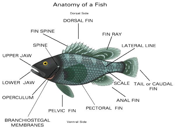 Common Saltwater Fish Diseases Travel Fishing