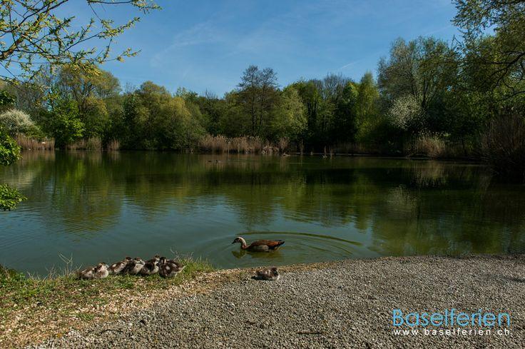 Schönes #Ausflugsziel in der Region #Basel, #Schweiz. Merian Park, Botanischer Garten in Brüglingen – Park im Grünen (Grün 80)