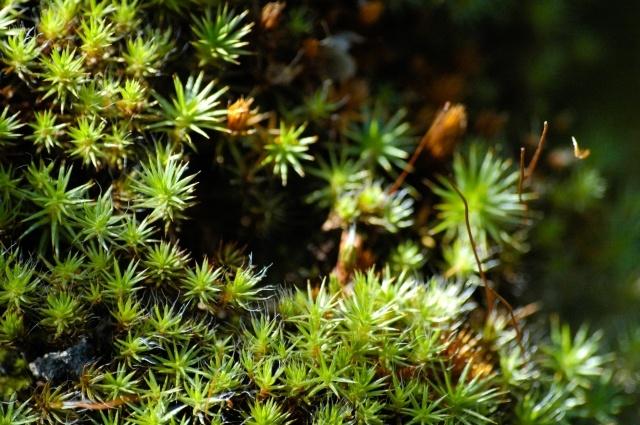 Мох, Растения