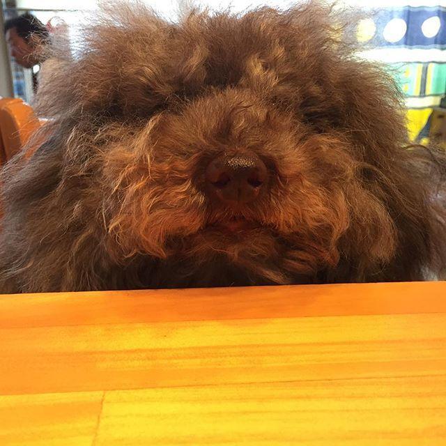だーれた? 第2の看板犬とんとん!  #dogcafek3  #dogcafe #dogcafekyoto #ドッグカフェ #ドッグカフェk3 #kyotocafe #京都ドッグカフェ #京都ドッグカフェk3 #京都カフェ #愛犬  #わんこ #カフェ #cafe #看板犬 #愛犬 #いぬばか部 #愛犬と旅行  #京都旅行 #京都カフェ部 #ねこ #そうだ京都行こう