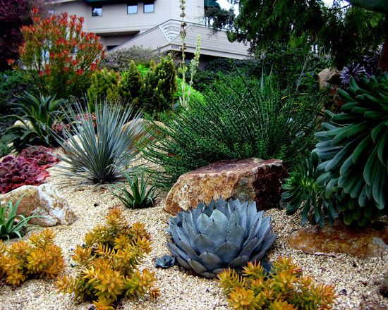 366 best xeriscape designs images on Pinterest Landscaping ideas