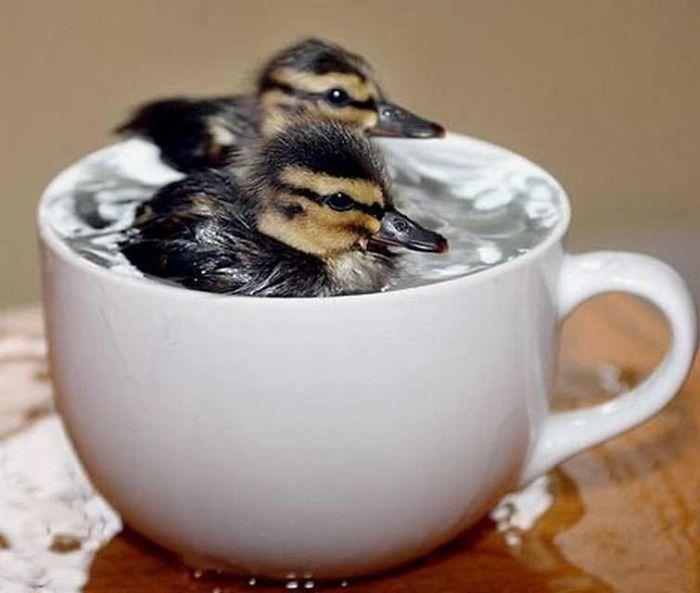 Утро, картинки доброе утро прикольные с животными и птицами