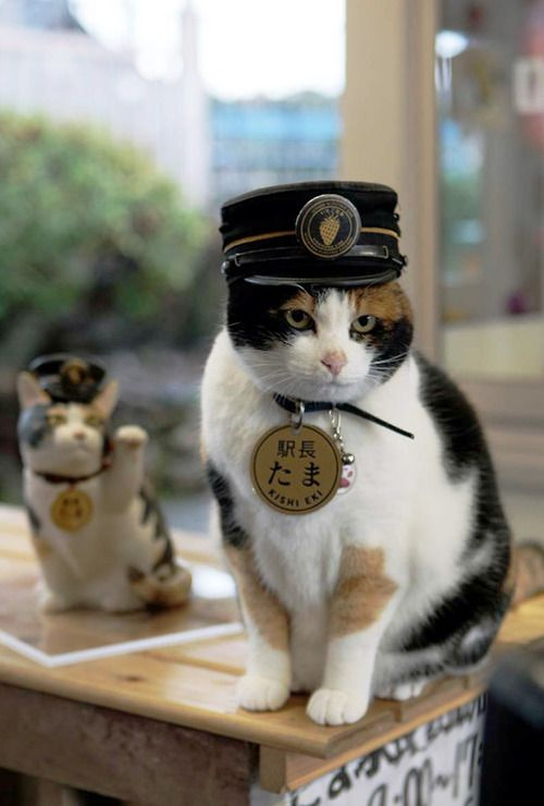 """In Kinokawa City (Wakayama, Japan) there's a peculiar train station manned by Tama, a peculiar station master. And """"manned"""" is certainly not the right word because Tama is a cat. And Kishi Station is perhaps the only station in the world where work has been outsourced to our feline friends."""