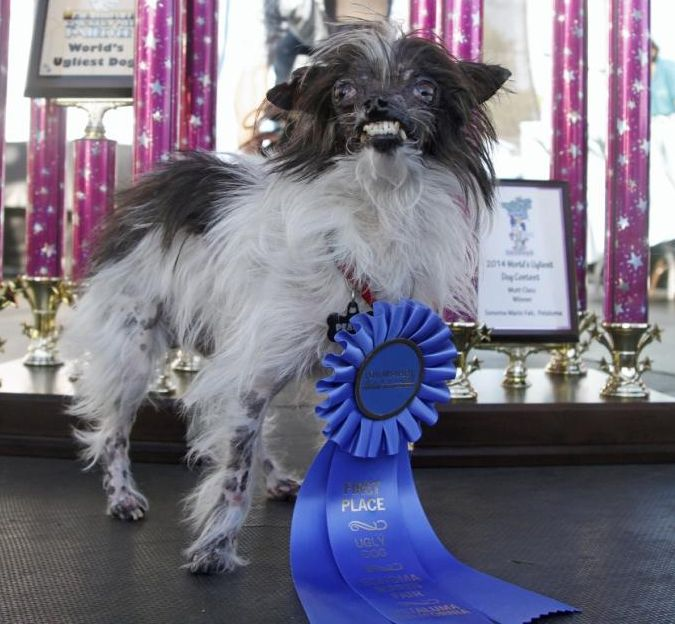 A list of the winners and breeds of the World's Ugliest Dog title from the year 2000 to the present.