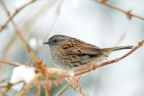 Sparrow by Richard@Sky...