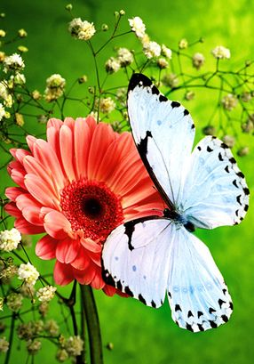 White Butterfly...:)