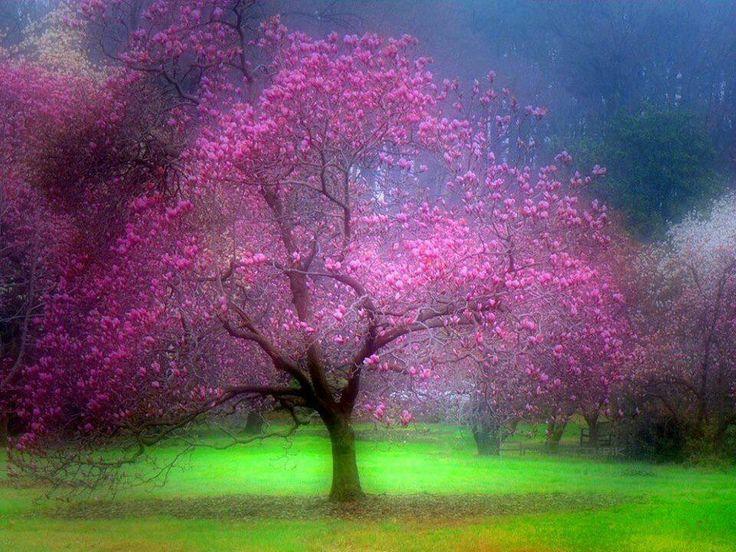 Magical Art Trees Pinterest Magical Forest