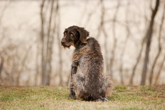 Best 25 Dog Died Ideas On Pinterest My Dog Died Dogs