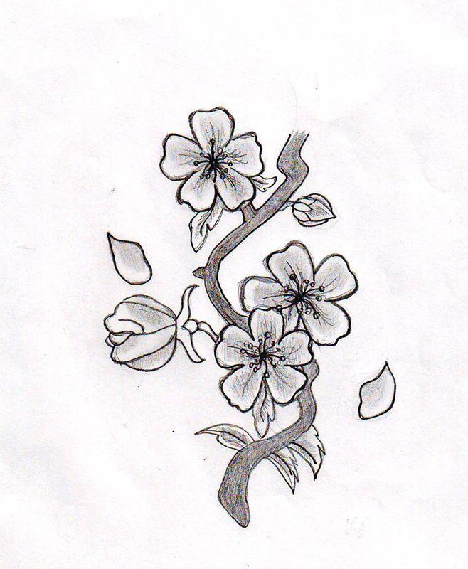 Cherry Blossom Tattoo Drawings | Cherry Blossom Flower by ~HelloKitten20 on deviantART