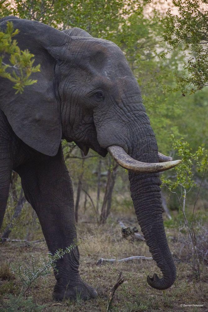 Gentle giants of Tintswalo Safari Lodge