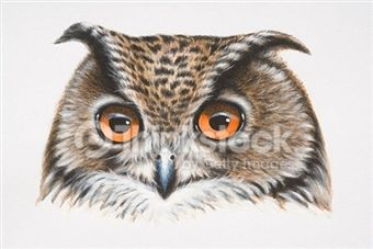 Owl Stock Photos and Illustrations - Royalty-Free Images - Thinkstock