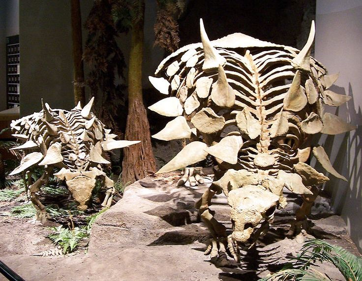 #Gastonia skeletons, North American Museum of Ancient Life (photo: Zach Tirrell) #dinosaur