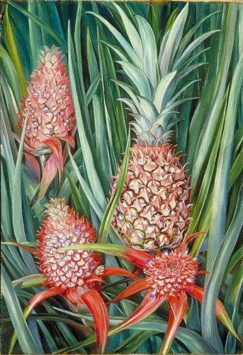 Borneo Pineapple. Painting by Marianne North.