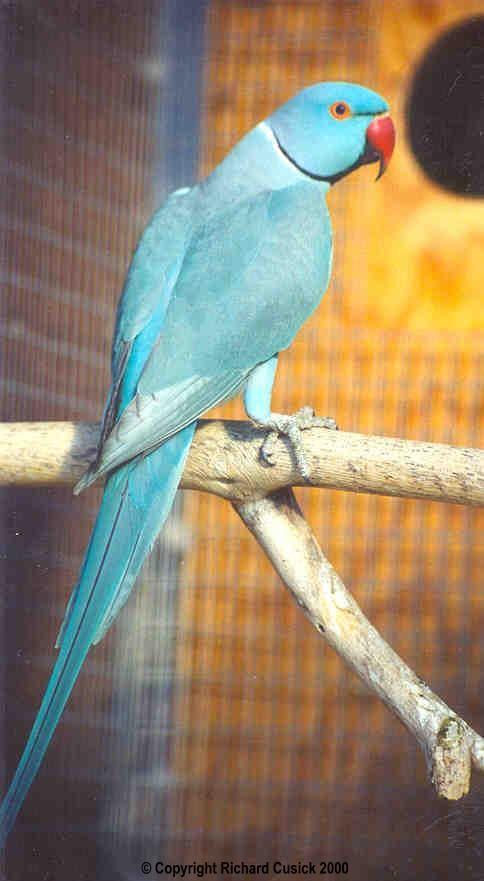 essay pet bird parrot My human-parrot relationship essay  when you see a pet bird fly,  bird supplies, parrot lungs 101, article clark, pamela,.