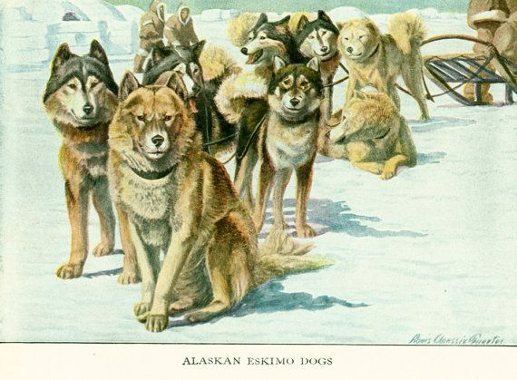 Pedigree dogs painting marked by Louis Agassiz #Fuertes, taken from The Book of Dogs published in 1919 by The  National Geographic Society, Washington D.C., U.S.A.  Louis Ag... #fuertes #spitz ➡️ http://jto.li/jvK7n