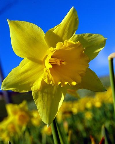 Spring has sprung cc justin green swishphotos www flickr com