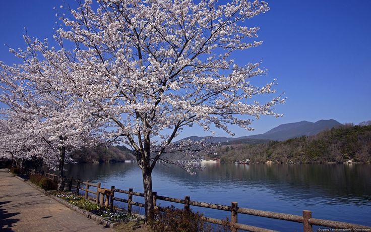 湖と桜、岐阜 (日本)