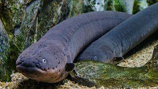 Info Ikan: 10 Ikan Paling Berbahaya Di Dunia