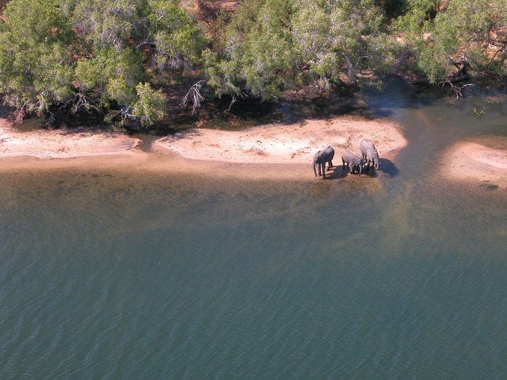 Elephants drinking from the Zamezi River
