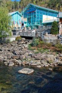 Ripley's Aquarium, Gatlinburg, TN, I love this place, could go every day! :)