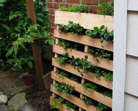 Great Herb Garden out of old Pallet, could use this for succulentsGardens Ideas, Pallets Gardens, Pallet Herb Gardens, Pallets Herbs Gardens, Turn Herbs, Vertical Herbs Gardens, Pallets Turn, Old Pallets, Pallets Projects