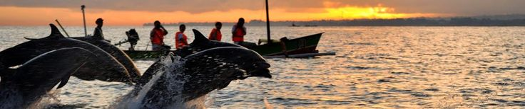 Bali Indonesia Holiday Travels: Lovina Beach Blessed by Dolphin Watching and Sunri...