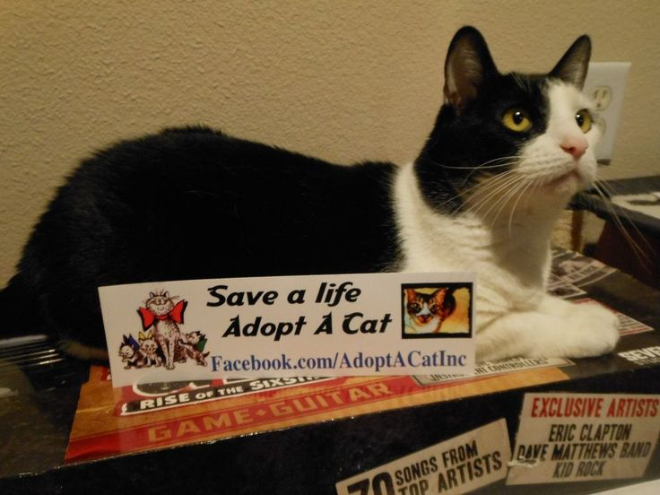 Save a Life Adopt A Cat bumper sticker decal for No Kill Shelter Charity Auction #AdoptACatInc