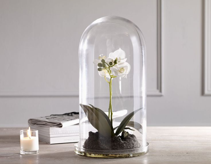 A Traditional And Elegant Glass Cloche Bell Jar Covers