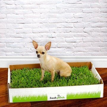 Great idea.. Disposable Dog Potty with REAL Grass:  Freshpatch.com