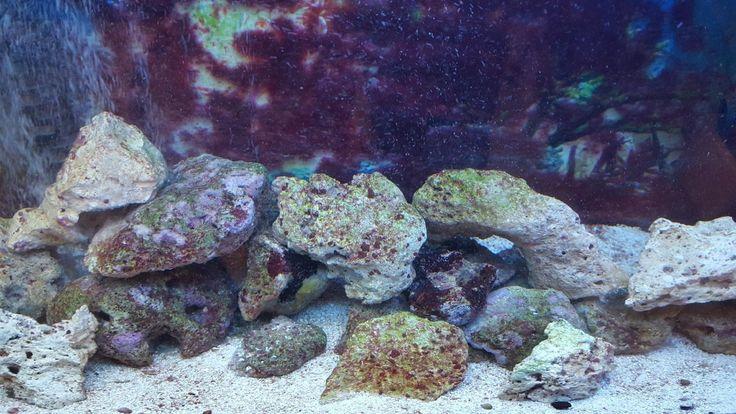 Saltwater Aquarium Setup Complete