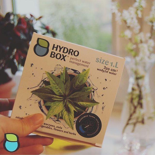 Hydrobox pod azalię doniczkową. #hydrobox #hydroboxpl #kwiaty #sadzenie #azalia #kwiat #flowers #flower #homedecor #diy #ideas
