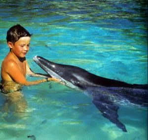 Facts about dolphins for kids