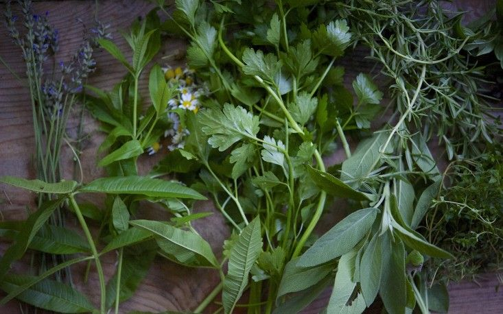 I grow lots of medicinal herbs and many that are delicious in tisanes. From left to right: lavender, lemon verbena, chamomile, parsley, sage, rosemary, and thyme.