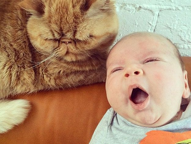 MEOWBERT AND SONNY, ZOE FOSTER AND HAMISH BLAKE'S CHILDREN