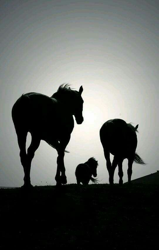 Musa Akkaya, Pferde